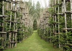Arte Sella Tree Cathedral summer