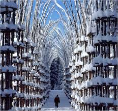 Arte Sella Tree Cathedral winter