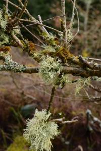 Lichen decorated trees
