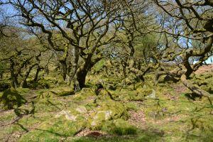 'Primordial Forest'