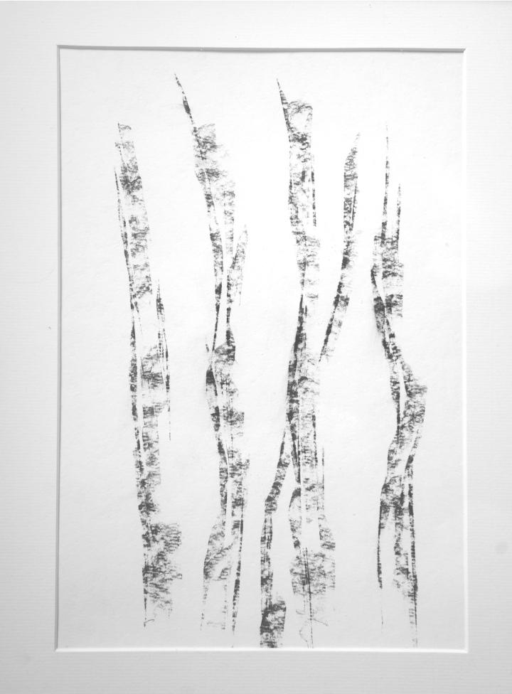 Silver Birches Carolyn J Roberts