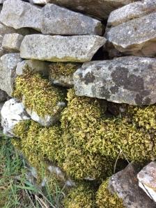 Dry Stone Wall - Carolyn J Roberts Artist